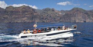 gladiator avistamiento de ballenas en Tenerife